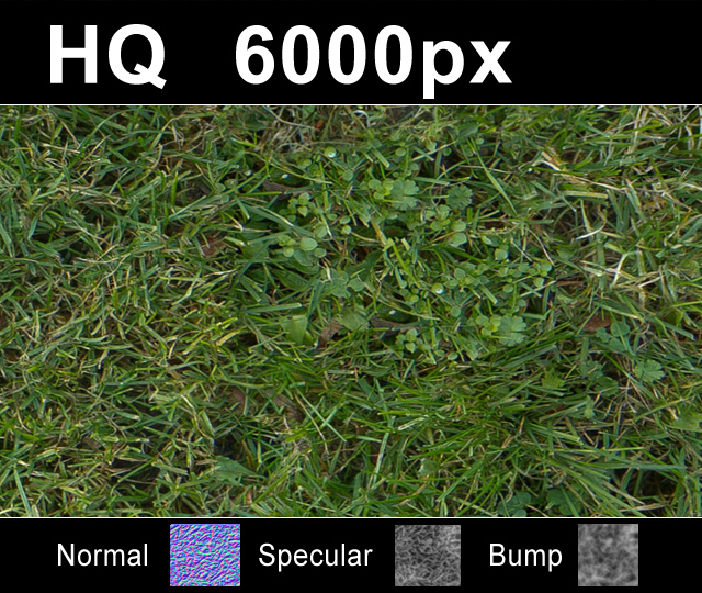 Click to enlarge image lawn5_1tex_close.JPG