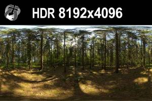 HDR 150 Forest