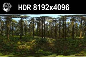HDR 151 Forest