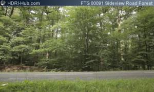 Sideview on Road in Forest - Locked camera pointing at a road in a forest. Calm moving background.
