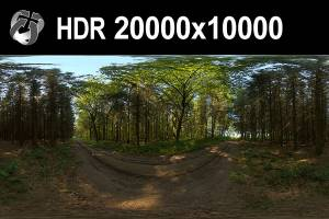 HDR 152 Forest 20k