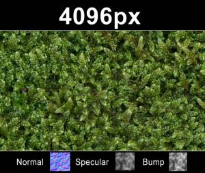 Moss 01 - High resolution moss texture. Seamless and tileable! Color/Normal/Specular/Bump Maps included
