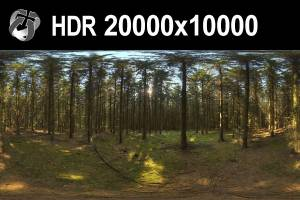 HDR 161 Forest 20k