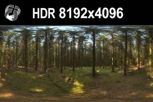 HDR 161 Forest