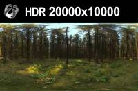 HDR 162 Forest 20k