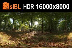 HDR 139 Forest