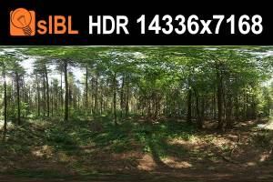 HDR 141 Forest