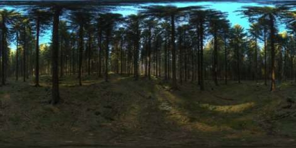 HDRI Dome: loc00146 - HDRI dome for visualizations and automotive renderings. afternoon,europe,forest,germany